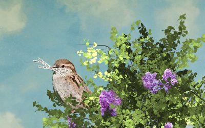 Nesting, Michelle Ciarlo Hayes