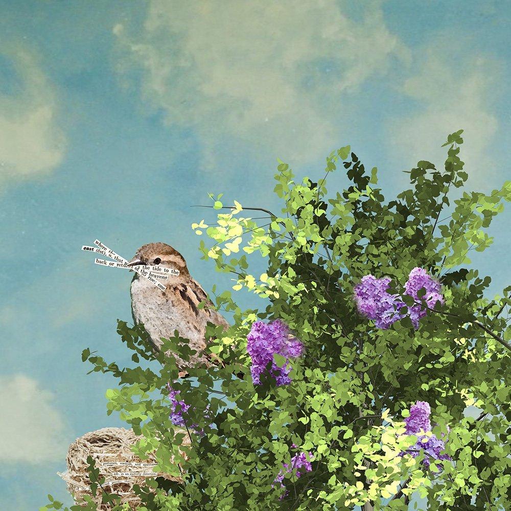 Michelle Ciarlo Hayes, Nesting